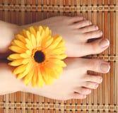 Zorg voor mooie vrouwenbenen met bloem Royalty-vrije Stock Afbeeldingen