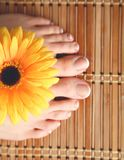 Zorg voor mooie vrouwenbenen met bloem Royalty-vrije Stock Foto