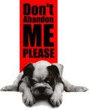 Zorg voor verdwaalde huisdieren Royalty-vrije Stock Afbeelding