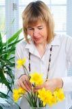 zorganizowanie kwiat Zdjęcia Stock