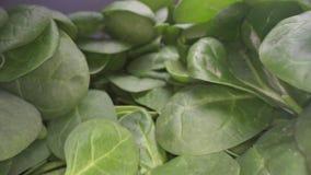 Zorra disparada das folhas verdes dos espinafres Deslizamento através do grupo das folhas vegetais dos espinafres empilhadas sobr filme