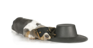 Zorro Stock Photography