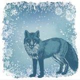 Zorro del invierno libre illustration