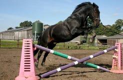 Zorro Jumping imagens de stock royalty free