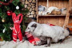 Zorro polar o ártico, días de fiesta, la Navidad, Año Nuevo Imagen de archivo