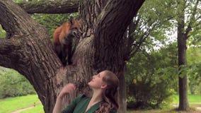 Zorro que camina de la presentadora de sexo femenino en parque al aire libre sentada roja, salvaje del animal doméstico almacen de metraje de vídeo