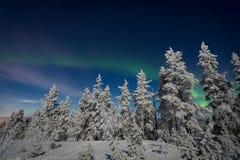 Zorza Borealis w Lapland Fotografia Stock