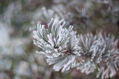 zostać zakrywający Estonia lodową rzeczną małą śnieżną zima zdjęcie stock