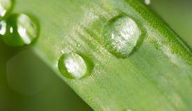 zostaw świeżego zieloną makro zdjęcia super wody Zdjęcia Stock