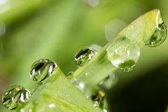 zostaw świeżego zieloną makro zdjęcia super wody Obraz Royalty Free