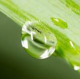 zostaw świeżego zieloną makro zdjęcia super wody Obraz Stock