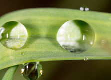 zostaw świeżego zieloną makro zdjęcia super wody Zdjęcie Royalty Free