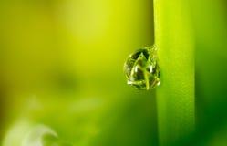 zostaw świeżego zieloną makro zdjęcia super wody Obrazy Stock