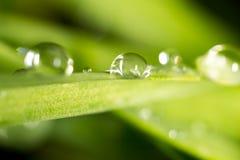 zostaw świeżego zieloną makro zdjęcia super wody Zdjęcie Stock