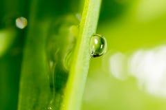 zostaw świeżego zieloną makro zdjęcia super wody Fotografia Stock