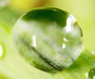 zostaw świeżego zieloną makro zdjęcia super wody Obrazy Royalty Free