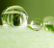 zostaw świeżego zieloną makro zdjęcia super wody Zdjęcia Royalty Free