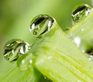zostaw świeżego zieloną makro zdjęcia super wody 2009 kwiatów makro- lato super Zdjęcie Stock