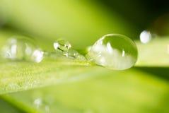 zostaw świeżego zieloną makro zdjęcia super wody 2009 kwiatów makro- lato super Obraz Royalty Free