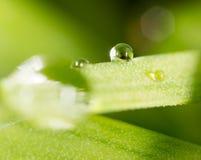zostaw świeżego zieloną makro zdjęcia super wody 2009 kwiatów makro- lato super Zdjęcie Royalty Free