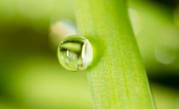 zostaw świeżego zieloną makro zdjęcia super wody 2009 kwiatów makro- lato super Zdjęcia Royalty Free