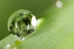 zostaw świeżego zieloną makro zdjęcia super wody 2009 kwiatów makro- lato super Obrazy Royalty Free