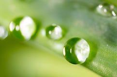 zostaw świeżego zieloną makro zdjęcia super wody 2009 kwiatów makro- lato super Zdjęcia Stock