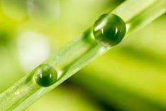 zostaw świeżego zieloną makro zdjęcia super wody 2009 kwiatów makro- lato super Obrazy Stock