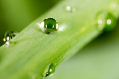 zostaw świeżego zieloną makro zdjęcia super wody 2009 kwiatów makro- lato super Fotografia Stock