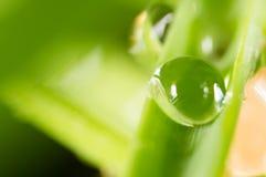 zostaw świeżego zieloną makro zdjęcia super wody 2009 kwiatów makro- lato super Fotografia Royalty Free