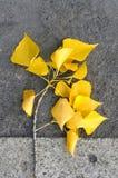 zostaw żółty Obrazy Royalty Free