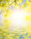 zostaw żółty Zdjęcie Royalty Free