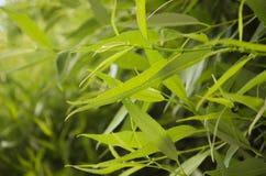 zostaw, blisko green świeża tła green Zdjęcie Stock