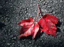 zostaw czerwony Fotografia Stock