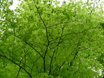 zostaw drzewa Fotografia Stock
