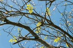 zostaw drzewa Zdjęcie Royalty Free