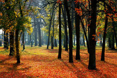 zostaw drzewa Fotografia Royalty Free