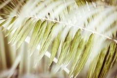zostaw drzewka palmowego fotografia royalty free