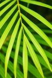 zostaw drzewka palmowego Zdjęcia Royalty Free