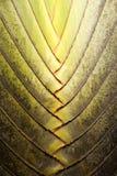 zostaw drzewka palmowego Zdjęcie Royalty Free