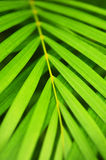 zostaw drzewka palmowego Zdjęcia Stock