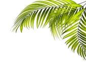 zostaw drzewka palmowego obraz stock