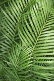 zostaw ilustracja bambusowa tła wektora Obrazy Royalty Free