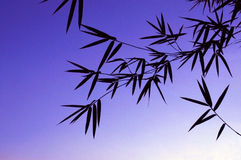 zostaw ilustracja bambusowa tła wektora Fotografia Stock