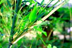 zostaw ilustracja bambusowa tła wektora Zdjęcia Royalty Free
