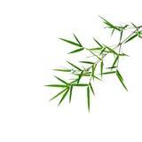 zostaw ilustracja bambusowa tła wektora Zdjęcia Stock