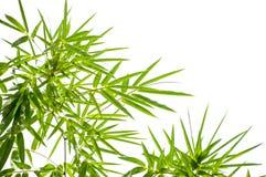 zostaw ilustracja bambusowa tła wektora Zdjęcie Royalty Free