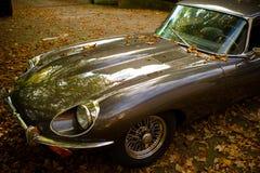 zostaw jaguara jesieni stary Zdjęcia Stock