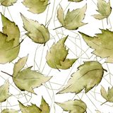 zostaw klonów green Liść rośliny ogródu botanicznego kwiecisty ulistnienie Bezszwowy tło wzór Royalty Ilustracja
