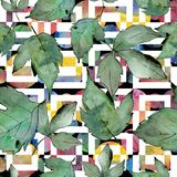 zostaw klonów green Liść rośliny ogródu botanicznego kwiecisty ulistnienie Bezszwowy tło wzór Ilustracja Wektor